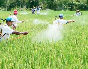 19 Hektare Pertanian Juwiring Terancam Wereng