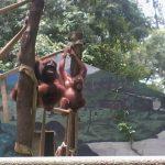 Kebun Binatang Jurug (TSTJ Solo)