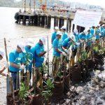 Holcim Hijaukan Perairan Sekitar Nusakambangan