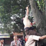 Cabuti Paku di Pohon Cintai Lingkungan,
