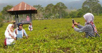 Sensasi Resto Kemuning, Nikmati Makan di Tengah Perkebunan Teh